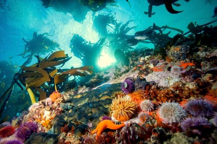 10 Best Places To Go For Scuba Diving In Cape Town!