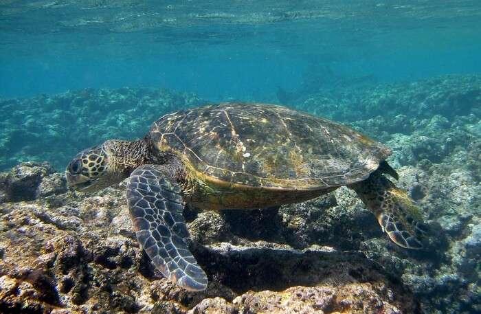 Turtle Walk view