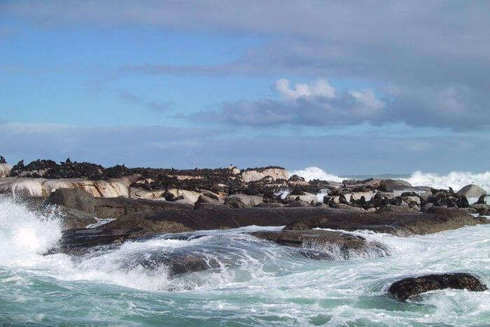 Seal Island in Africa