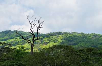 Sinharaja Forest Reserve Information