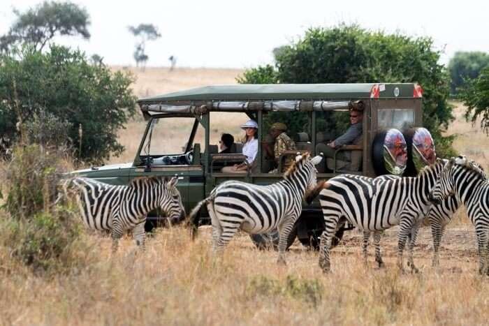 Take the Ingrid's Safaris
