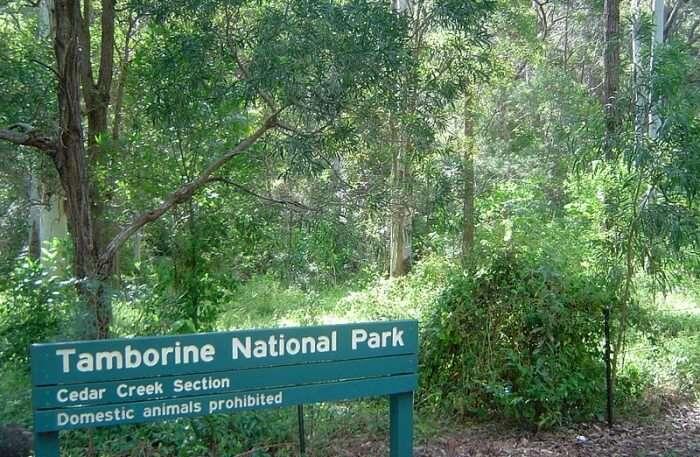 View of Tamborine National Park