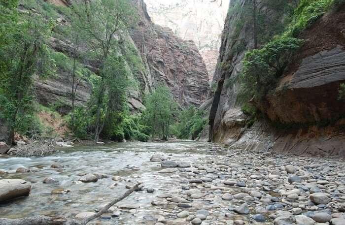 Narrows Trek Trail View