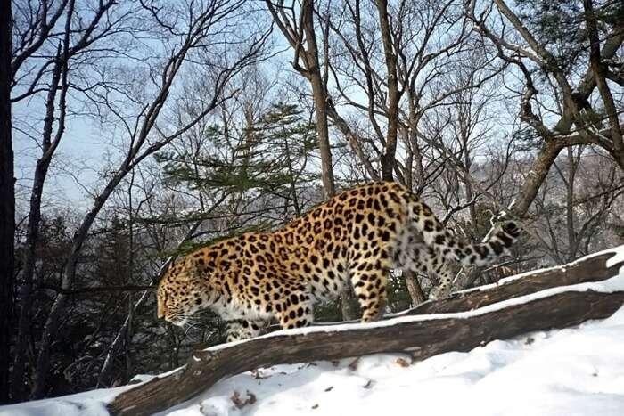 The Safari Park of Russia
