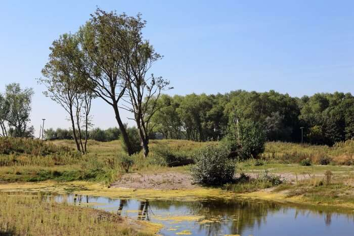 The Zwin Nature Reserve