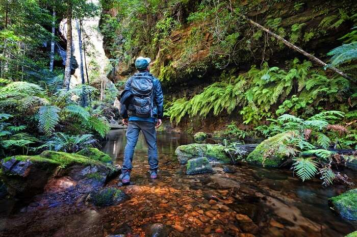 Trekking Sites In Sydney