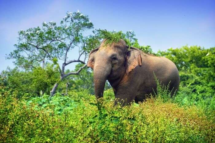 Udawalawe National Park Cover