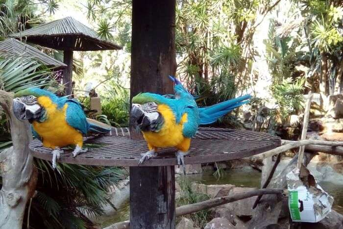 6 Exotic Places To Visit Near Bali Bird Park In September