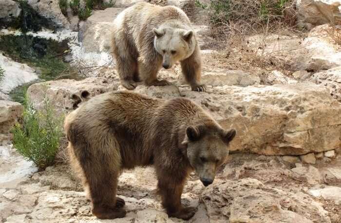 Visit the Jerusalem Biblical Zoo