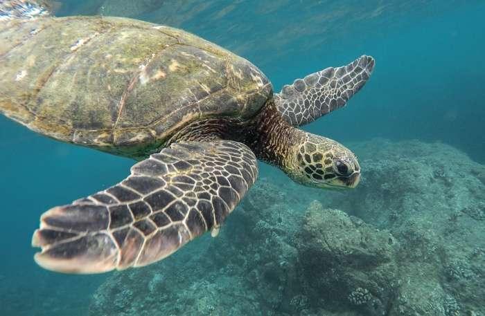 Turtles view