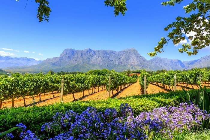 Amazing Cape Winelands