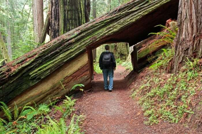 Hiking Trails in Northern California