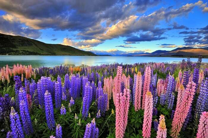 new zealand south island booking