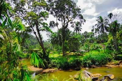 forest sinharaja