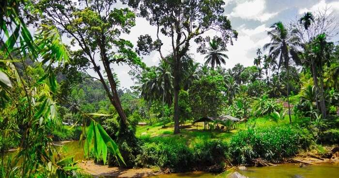 forest sinharaja