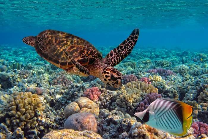 wildlife in Fiji