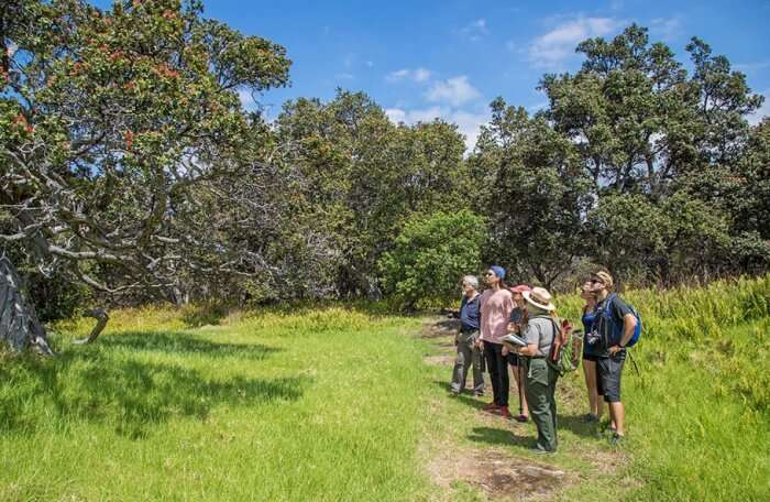 A Guided Nature Walk