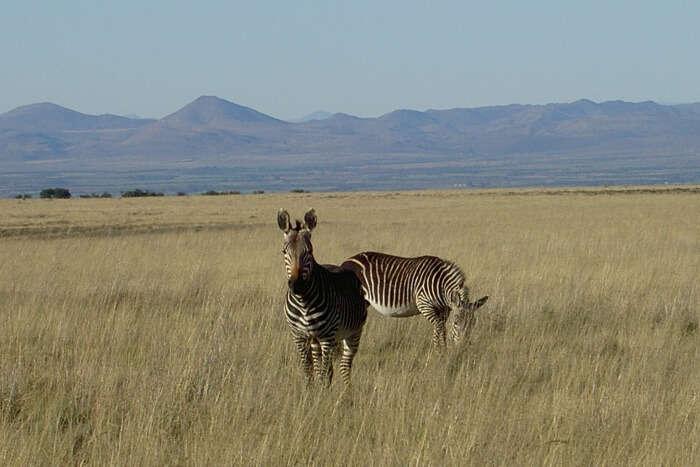 About Mountain Zebra National Park