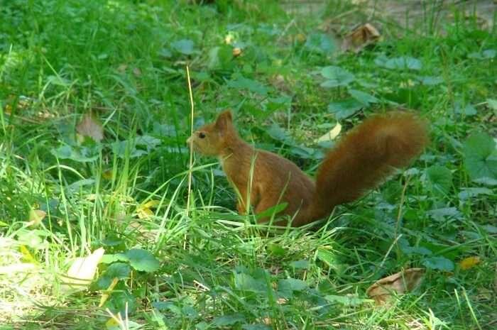 About Wildlife In Moldova