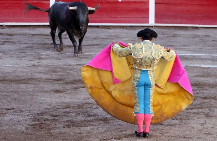 Attend the Bull Fight