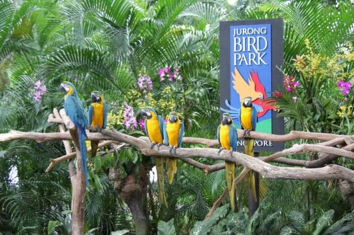 Bird Shows At Jurong Bird Park