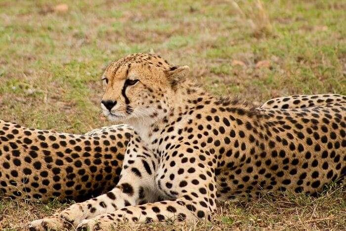 Bird watching and cheetah tracking