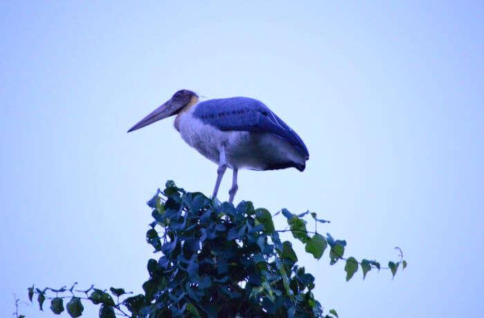 reaching to the Kaziranga National Park