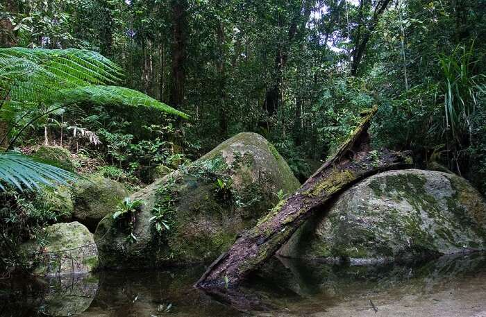 Daintree National Park view