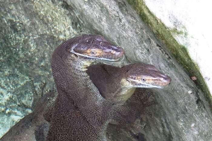 Discover Currumbin Wildlife Sanctuary