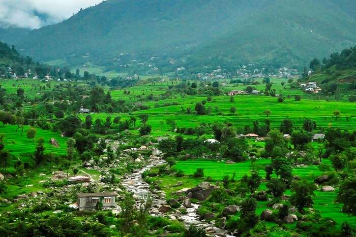 Greenery in hill station