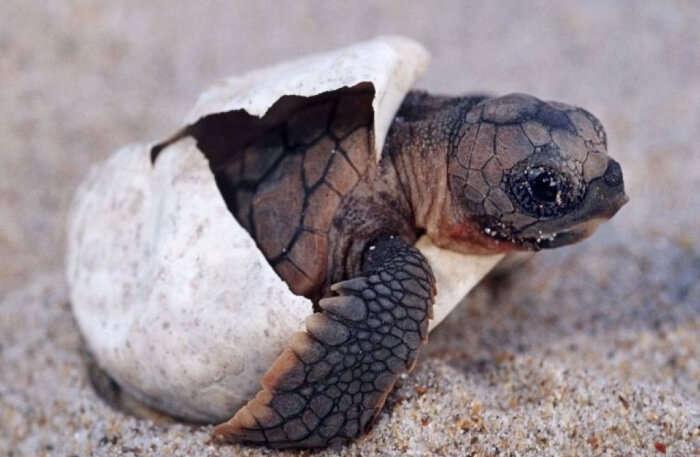 Turtle closeup view
