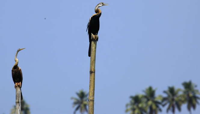 Kumarakom Bird Sanctuary In Alleppey