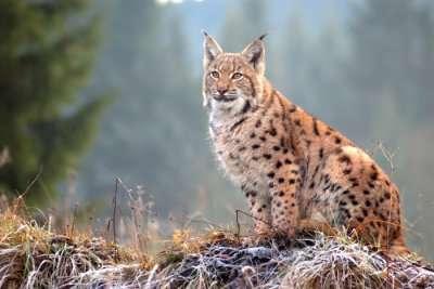 Montenegro Wildlife