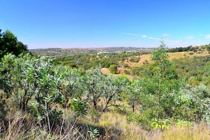 Moreletaspruit Nature Reserve