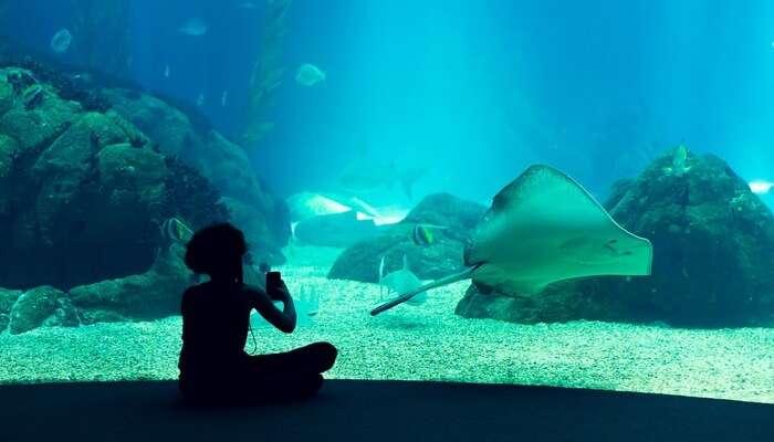Meet Colourful Sea Creatures