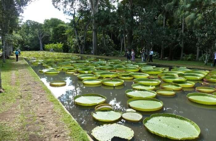 Pamplemousses Gardens