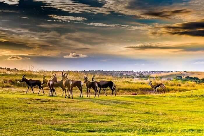 Best of Wildlife in Pretoria