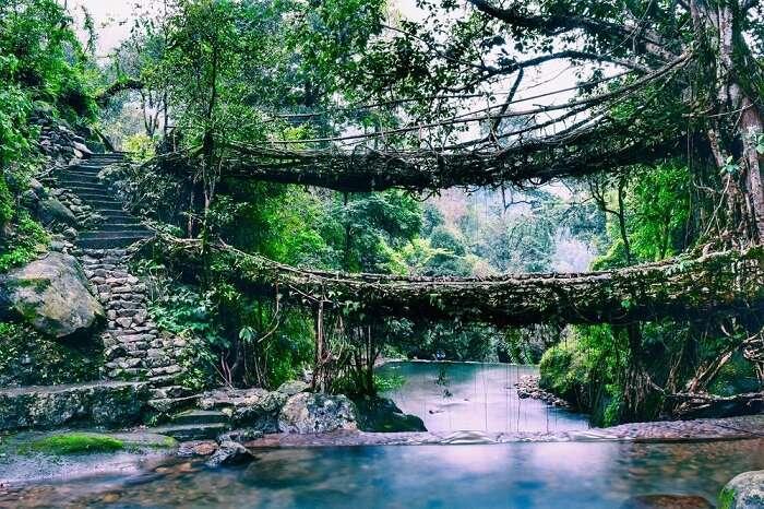 Shillong root bridge