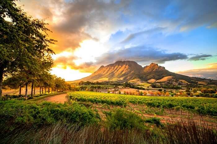 Stellenbosch Places To Visit cover
