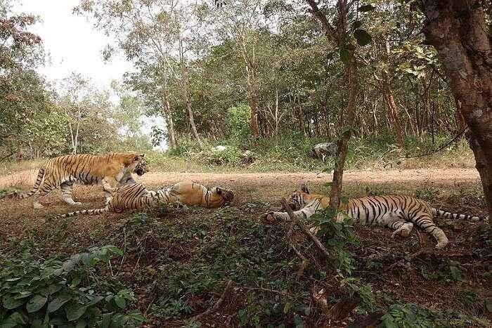 view of the wildlife in tyavarekoppa