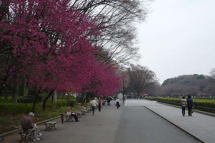 beautiful japanese tree bending