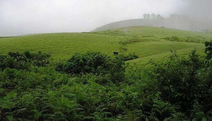 Vagamon Meadows