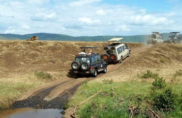 Wildlife Jeep Safari