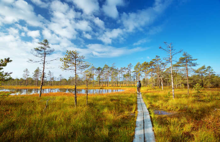 Top National Parks In Estonia