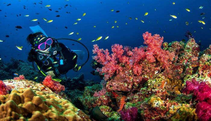 Amazing Scuba Diving In Thailand