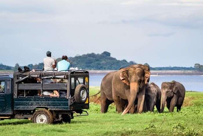 Amazing Chundikulam National Park