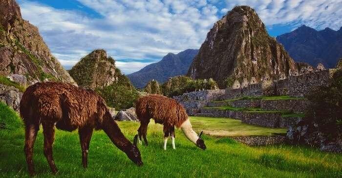 Huayna Picchu Cover