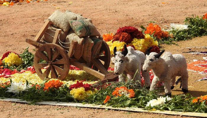makar sankranti in andhra pradesh