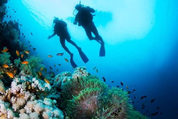 divers under water