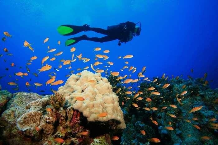naples scuba diving